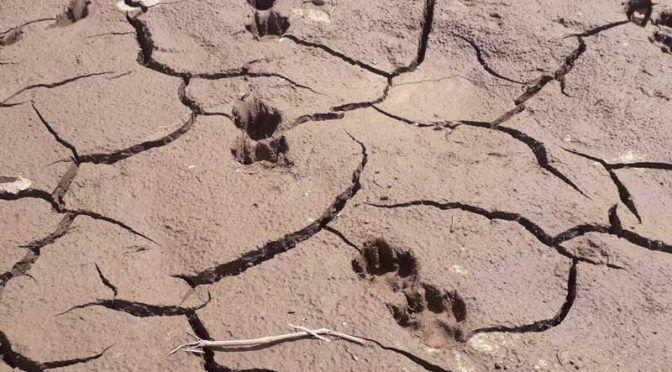 Veracruz: Solicitan declaratoria de emergencia por sequía (La jornada de Veracruz)