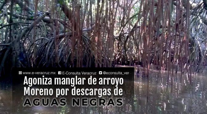 Veracruz: Agoniza el manglar de Boca del Río por descargas de aguas negras (e-consulta)