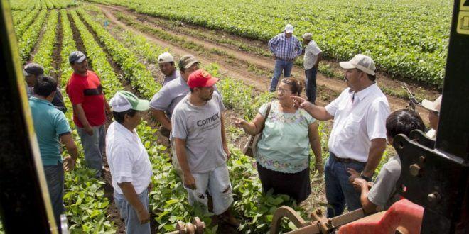 Yucatán: Lamentable, fallo de SJCN sobre transgénicos en el estado: campesinos (La jornada)