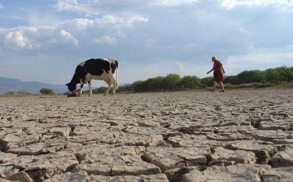 San Luis Potosí: Sequía extrema afecta a población y a ganado en 13 municipios (Heraldo de México)