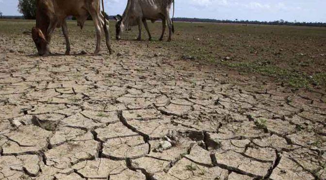 Chihuahua: Pide estado a Gobernación declaratoria de emergencia por sequía (Norte digital)