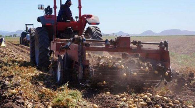 Sonora: Analizan en el Valle del Yaqui reducir superficie de siembra ante falta de agua (Expreso)