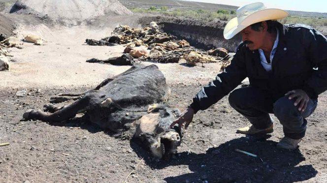 Durango: Tardan en estado para solicitar declaratoria de emergencia (Excelsior)