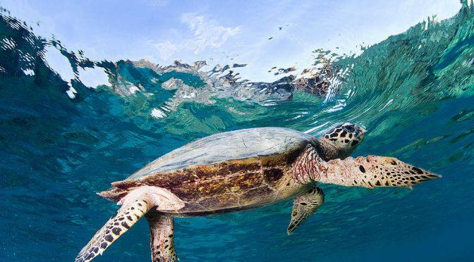 ¿Cómo avanza el Tratado Global por los Océanos? (Greenpeace)