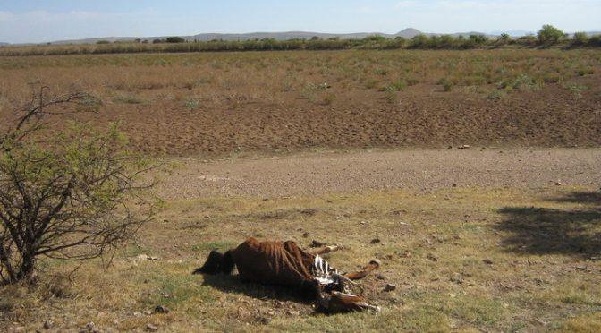 Durango: Declaran desastre por sequía (El Siglo de Durango)