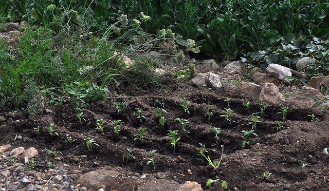 Aguascalientes: En riesgo, cultivos de temporal por falta de lluvia (La jornada de Aguascalientes)
