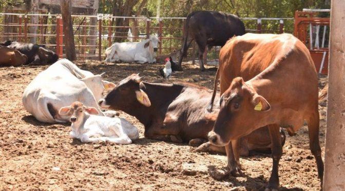 Veracruz se queda sin agua para el sector ganadero y consumo humano (Tribuna)