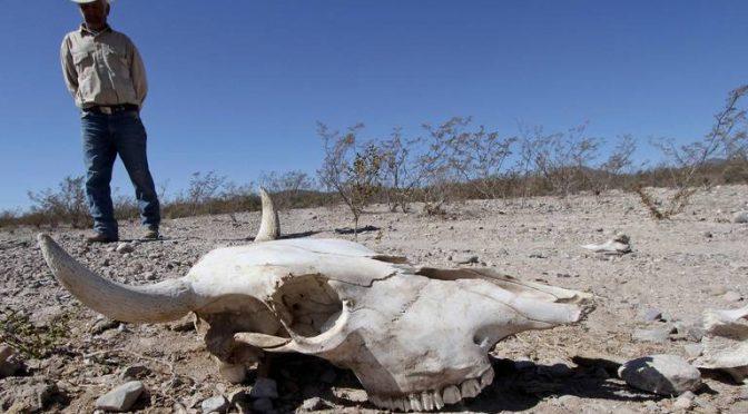 Michoacán: Huertas de aguacate están dejando sin agua a los manantiales (El Sol de Zamora)