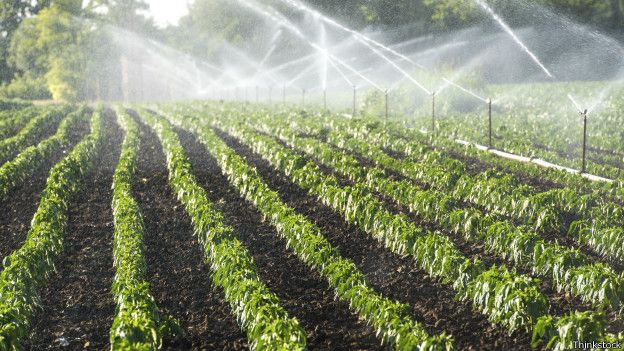 México: Agricultores demandan revisar esquema de concesiones en la próxima ley de aguas (La jornada)