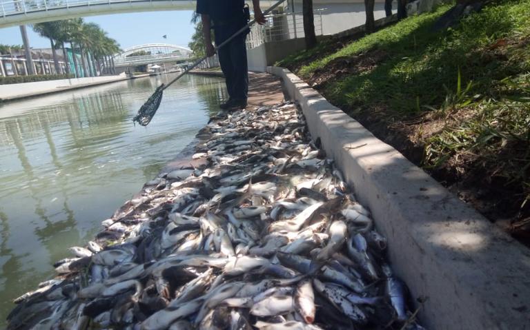 Tamaulipas: Canal de la Cortadura arroja miles de peces muertos (El Sol de Tampico)