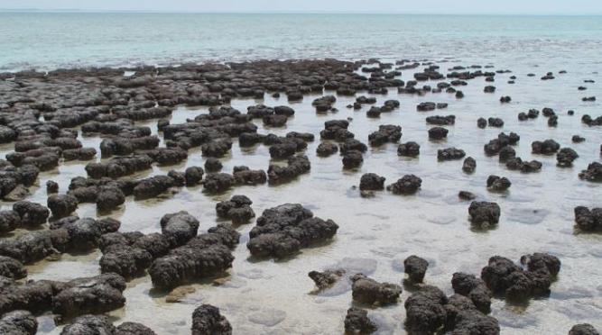 Canadá: Buscan almacenar dióxido de carbono en rocas en el fondo marino (El Diario de Victoria)