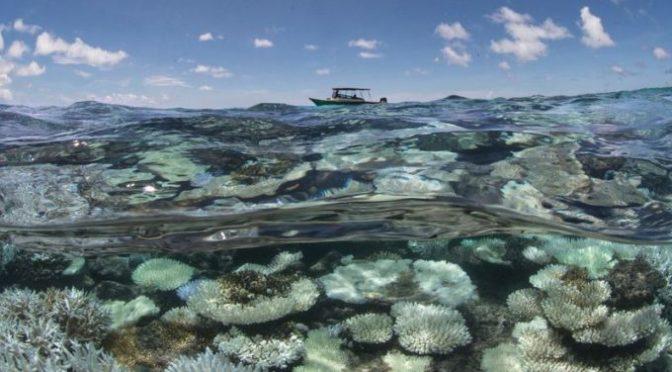 Quintana Roo: Aguas negras inciden en muerte de corales (Cuarto Poder)
