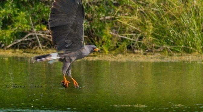 Quintana Roo: Piden que Laguna de Bacalar sea Área Natural Protegida para cuidarla del turismo (Pagina 3)