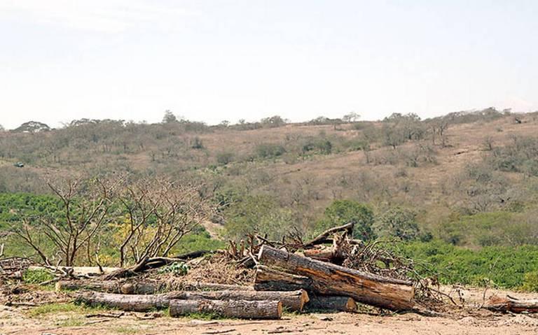 Norte de Veracruz, muy golpeado por la sequía; demandan apoyos (Diario de Xalapa)