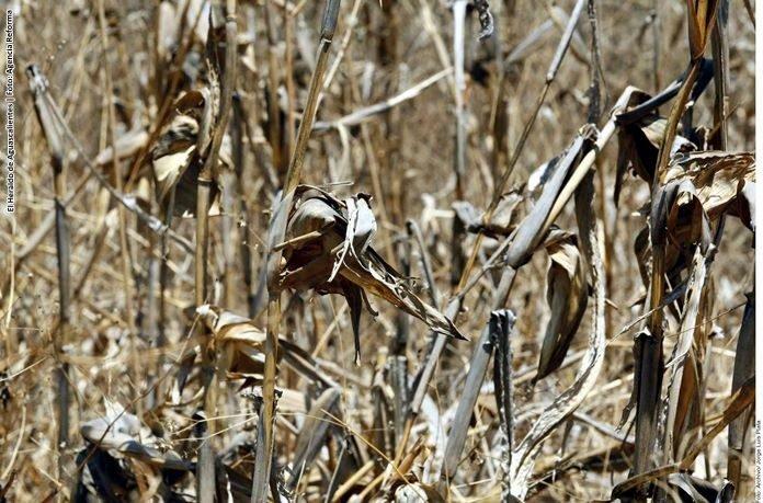 Argentina: Sequía continúa deteriorando trigo, cosecha no llegará a 21 mln T estimados en mayo: BCBA (Reuters)
