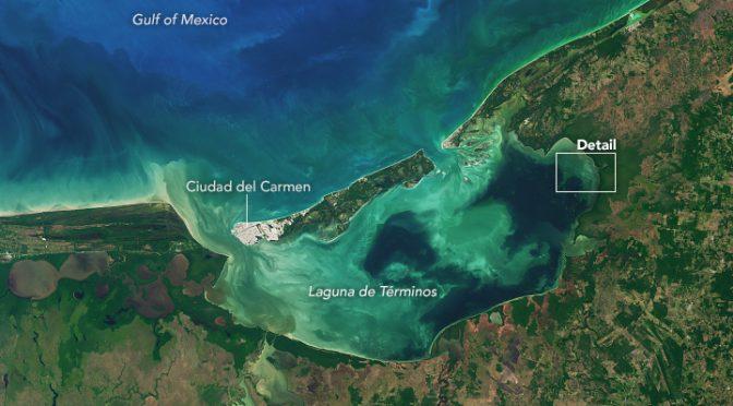 Campeche: Laguna de Términos pierde casi la mitad de sus humedales en 20 años (La jornada maya)