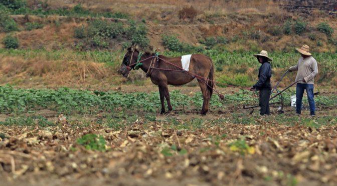 Hidalgo: Sequía severa y extrema afecta 55 mil hectáreas de cultivo (Milenio)