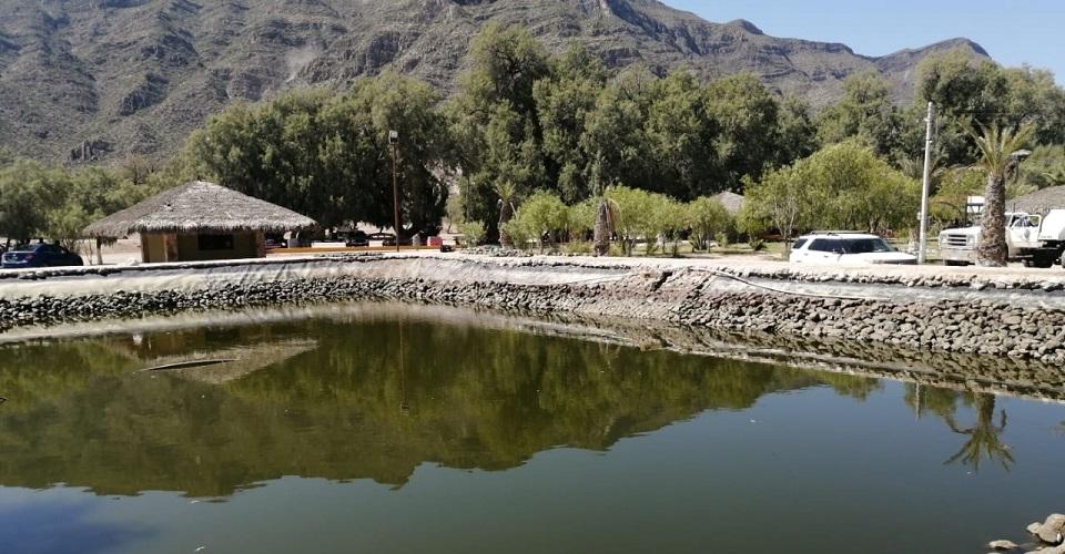 ¿Ecocidio o descuido? Autoridades de Coahuila investigan la muerte de miles de peces en Pueblo Mágico (Animal Político)
