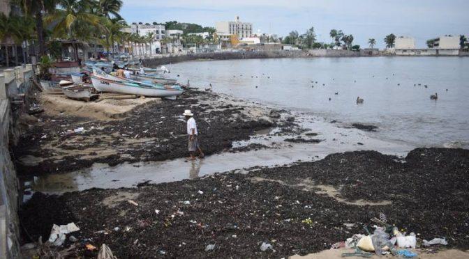 Sinaloa: Semarnat limita el retiro de algas en las playas de Mazatlán (El Sol de Mazatlán)