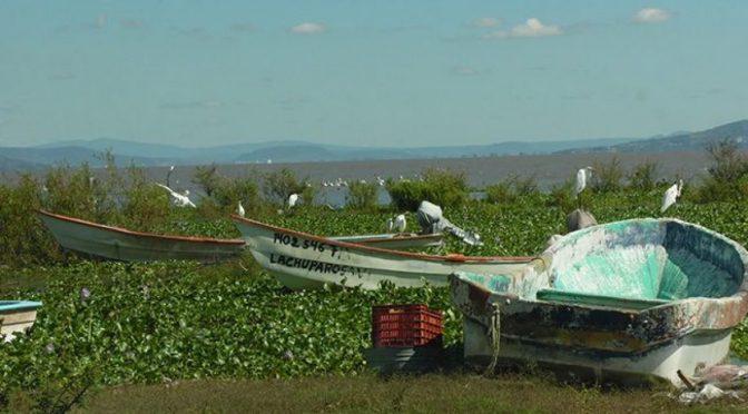 Michoacán: Contaminación y azolve amenazan con secar el Lago de Chapala: CIIDIR (Quadratin)