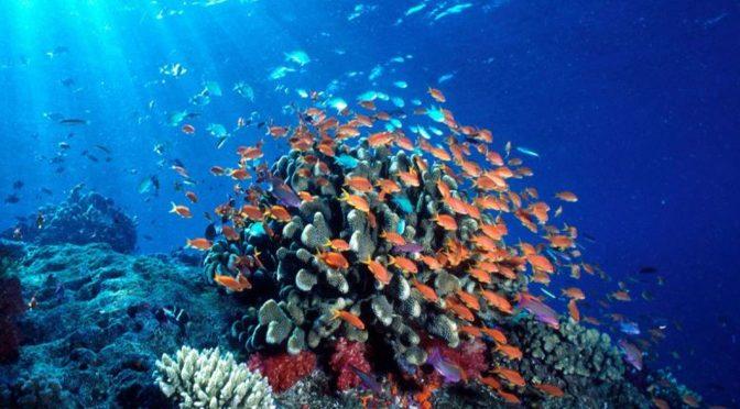 Uso de fungicidas afecta funcionamiento de sistemas acuáticos (Correo del Orinoco)
