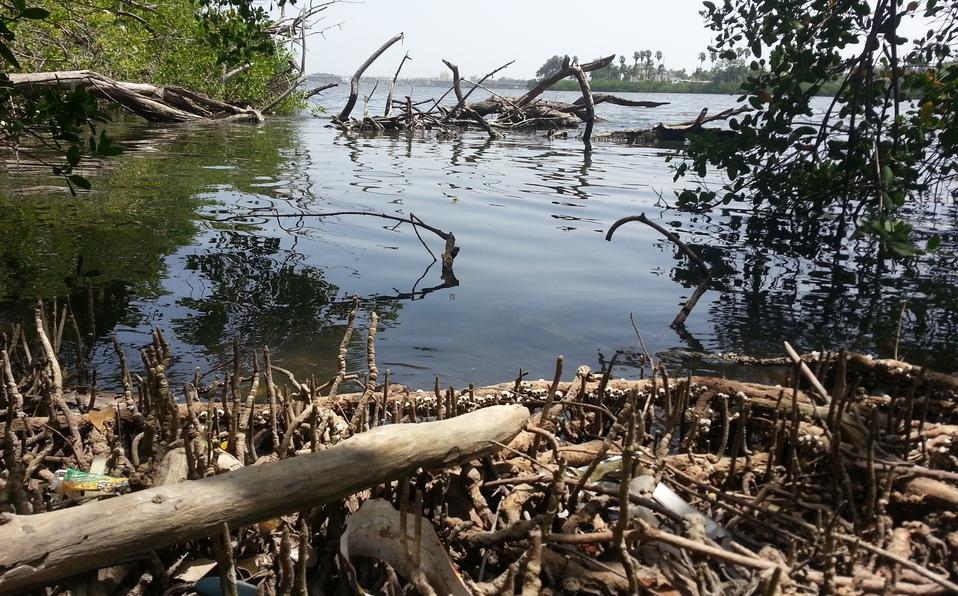 Tamaulipas: Mangle en el Carpintero se pudre por contaminación (Milenio)