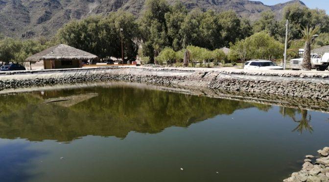 Coahuila: Medio Ambiente investiga peces muertos en estanque (Milenio)