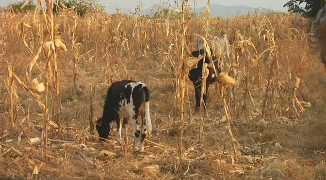 Grave sequía afecta a mas de 66% del territorio Mexicano (Alerta Geo)