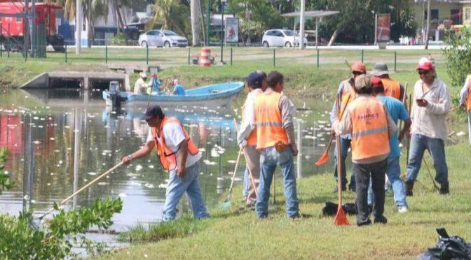 """Altamira: """"Aumento en salinidad de agua está matando a los peces"""" (Milenio)"""