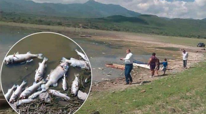 San Luis Potosí: Mueren cientos de peces en presa de San Diego (Pulso)