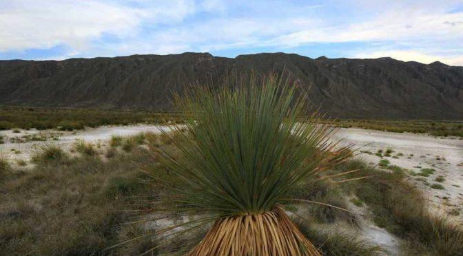Secas, más de 90% de pozas en Cuatro Ciénegas, Coahuila (Milenio)