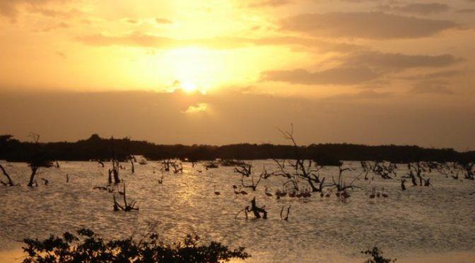 Yucatán: Encuentran bacterias resistentes a antibióticos en ciénega de Sisal (Punto Medio)