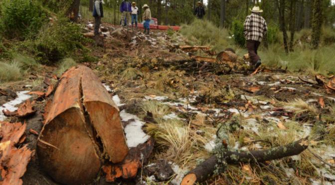 México: Ubicadas, 122 zonas críticas de tala ilegal (La jornada)