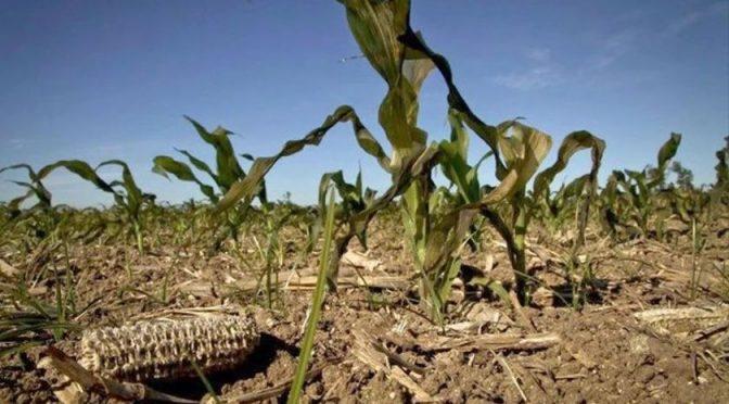 Sequía afecta 25 mil hectáreas de maíz y frijol en Hidalgo (AM)