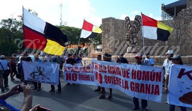 Yucatán: Nueva protesta contra la construcción de mega granja porcícola en Homún (Diario de Yucatán)
