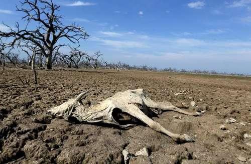 San Luis Potosí: Declaran emergencia por sequía en 13 municipios (La jornada)