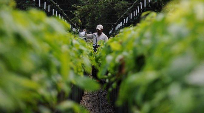 Impuesto al uso del agua sería un 'duro golpe': Consejo Nacional Agropecuario (El Financiero)