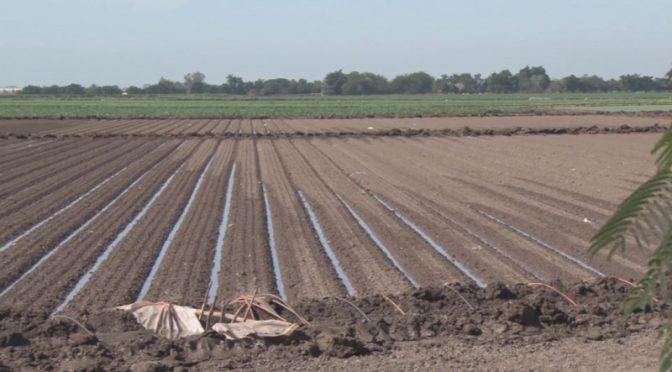 México: Nuevo Impuesto al Agua dañará la rentabilidad de los productores agrícolas (TVP)