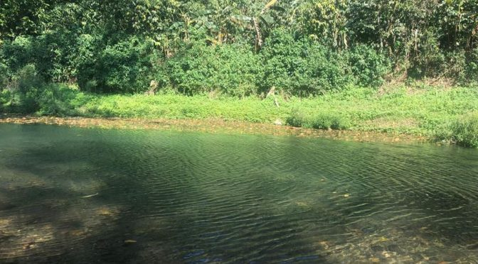Veracruz: Limpian ambientalistas los ríos Jabalí y Atoyac (El mundo)