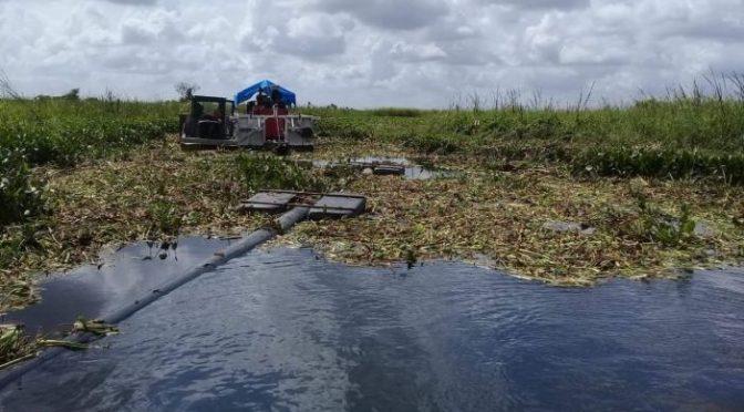 Tabasco: Derrame de aceite arrasa con los peces (Tabasco hoy)