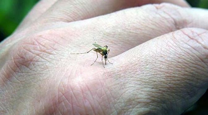 Oaxaca pide a ciudadanos atender instrucciones para combatir dengue (mvs noticas)