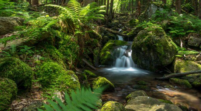 Mundo: La mitad de las aguas subterráneas no podrá mantener ecosistemas acuáticos en 2050 (El Ágora)