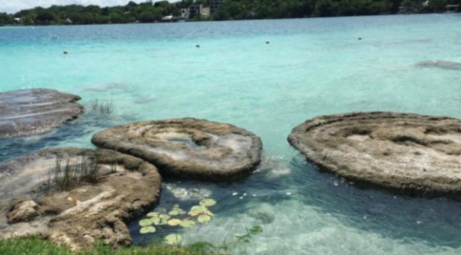 Quintana Roo: No hay ley para proteger a los estromatolitos de Bacalar: Arroyo Franco (La Jornada Maya)
