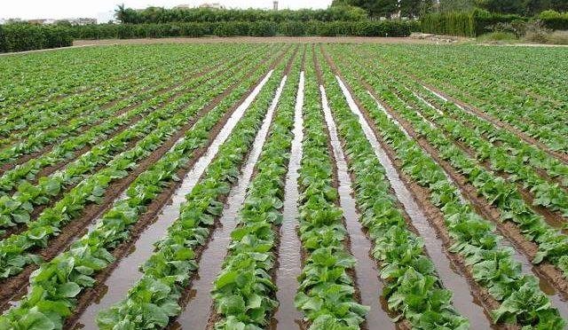 Impuesto al agua para productores del agro provoca disgustos (El Sol de México)