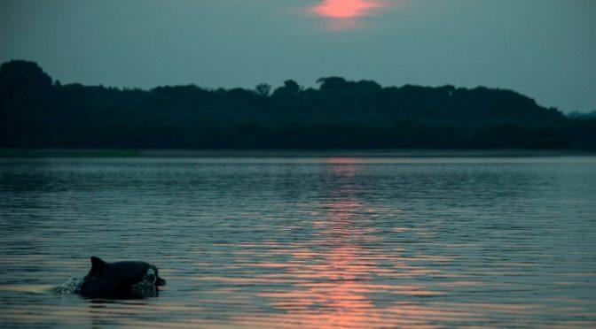 Delfines de la Amazonia están contaminados con mercurio (AFP)