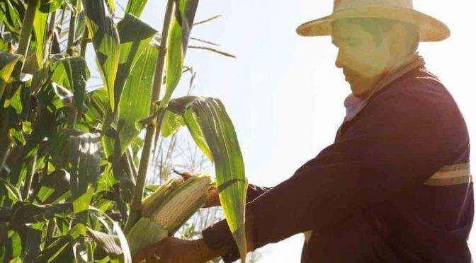 Hacienda apoya cobros de agua al campo; sostiene que no se afectará a pequeños productores (El Economista)