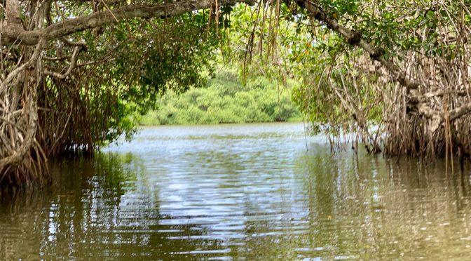 México: Conagua entrego 77 concesiones en zonas sin suficiente agua (El CEO)