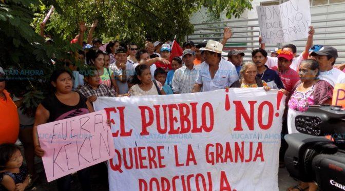 Yucatán: Juez federal mantiene suspensión de mega granja porcícola en Homún (Yucatán Ahora)