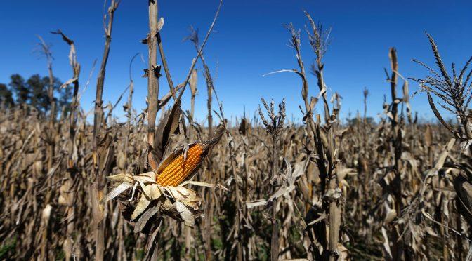 Europa se seca: la sequía será nuestra mayor amenaza en el futuro (El tiempo hoy)