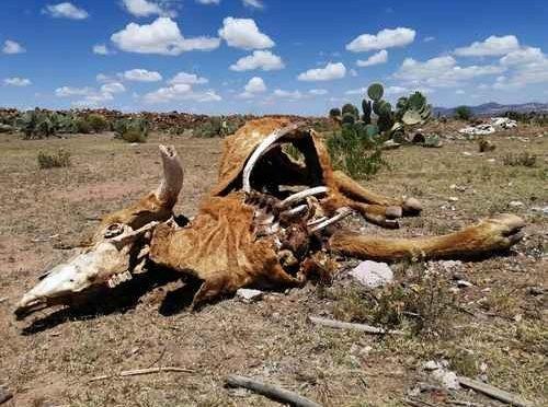 En sequía, 56% del territorio nacional (La Jornada)